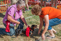 The Dachshund Derby winner receives his winner's garland at Oktoberfest 2015.
